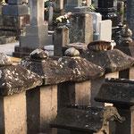 左から四つ目の墓石、わかりますか?上にフワフワした物体が。ネコさん。