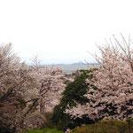 観音堂からの眺め。琵琶湖を見下ろす絶景!