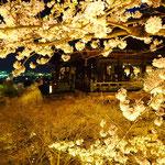 桜の間から舞台を。