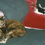 Ppphhh... DAS können Katzen am allerbesten!