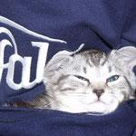 Was fressen Katzenwelpen?