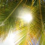 Palmen Curacao