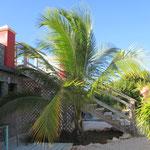 Palme Curacao