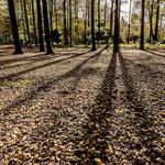 Bilthoven, Landgoed Beerschoten