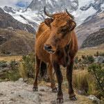 Huarez (Peru), Andes