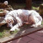 Früher hätte sie NIEMALS Zeit gehabt im Garten zu schlafen März 2011 diese Foto hat mich erschreckt