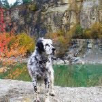 Indian summer dog