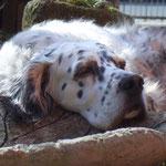 März 2011....meine alte weise Dame...schon sooo müde