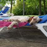 Sleeping pool dog