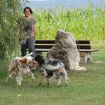 Vermissten Hund erfolgreich gefunden Foto JP