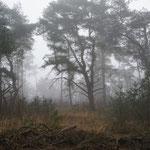 Holland, Naturschutzgebiet Hoge Veluwe