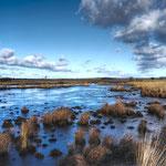 Holland, vereister Teich in de Hoge Veluwe
