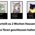 Nasy - Katzenbande :-)