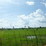 eins von vielen Reisfeldern