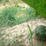 der Versuch das Staubecken und die Ernte, die dadurch möglich ist auf ein Bild zu bringen