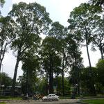 ein paar von vielen großen Bäumen in der Stadt