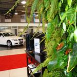Mur végétal naturel autoportant  - Concessionnaire automobiles