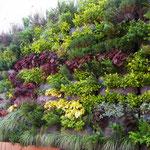 Mur végétal 18 m² juste livré