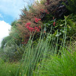 Mur végétal naturel extérieur