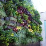 Mur végétal fraichement livré