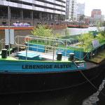 Die Grüne Schute liegt seit Dezember 2019 im Alsterfleet unweit der Schaartorschleuse. Der umgebaute Lastenkahn ist ein wertvolles Trittsteinbiotop im naturfernen Alsterfleet. Zudem wird er dem Projekt als Lernort dienen (Foto: A. Lampe)