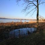 Einige Uferbereiche wurden in den letzten Jahrzehnten mit Röhrichten bepflanzt. Wir setzen uns dafür ein, dass diese Röhrichtzonen größer und artenreicher werden (Foto: A. Lampe)
