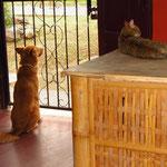 Maduh (Hund) und Lila (Katze). Maduh ist total in Lila verknallt aber Lila nicht so wirklich...