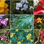Vielfalt der Flora