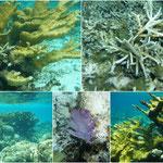 Formen und Farben unter Wasser