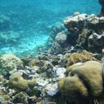 """Johanna hat mir freundlicherweise ihre Unterwasserkamera geliehen nachdem meine ja in San Juan del Sur """"verschwunden"""" ist"""