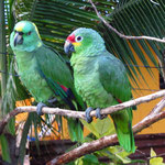 Die Papageien wohnten bei uns am Hostel