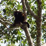 Eine Affenfamilie haben wir auch gesehen