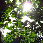 Flora im und ums Projekt