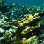 Wunderschöne Unterwasserlandschaft