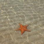 Hui, der erste Seestern (nicht der erste den ich jemals gesehen hab, sondern der erste am DEM Strand...)