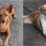 Coco und Cookie - die Hunde des Projektes