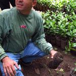 Ruiz erklärt den Kaffeeanbau