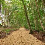 Der Weg durch den Jungle (gleich neben dem Strand). Der Nationalpark von Cahuita. UUUUUUUUUUNGLAUBLICH spannend.
