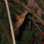 Kolibri im Hostelinnenhof