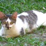 Hat die Katze net supertolle Augen???
