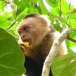 ...Bananen!!! *FREUDE* Die Mama kam dann ganz schnell angerannt und wollte den Affen vertreiben, hat sie auch geschafft, nur leider war der so schlau und hat die Plastiktuete mit den Bananen...