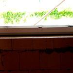 normales Fenster