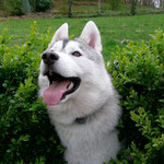 Mistral - Réf 206150517 - Husky Siberien - M - Obéissance de base