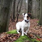 Clay - Réf 090108/16 - Jack Russel Terrier - M - Tournages & Photos - Rem : va en moto