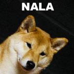 Nala -