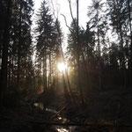 Lorenzer Reichswald - von Altdorf zum Tiergarten