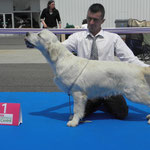 1er championnat de France Puppy 2012