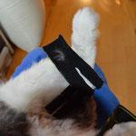 Hier zum Vergleich der sehr plüschige Fuß von meinem 7,5 kg Kaninchen Karlsson