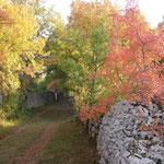 chemin du Causse, muret en pierre sèche
