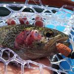 ビッグ・ドライフライの釣りは北海道ならでは。フライは軽くシンプルに、投げやすさを優先して仕上げるのがコツ。